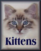 See Ragdoll Kittens For Sale
