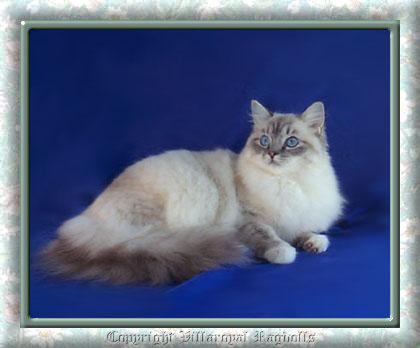 More Coat Color Info - VetGen - Veterinary Genetic Services